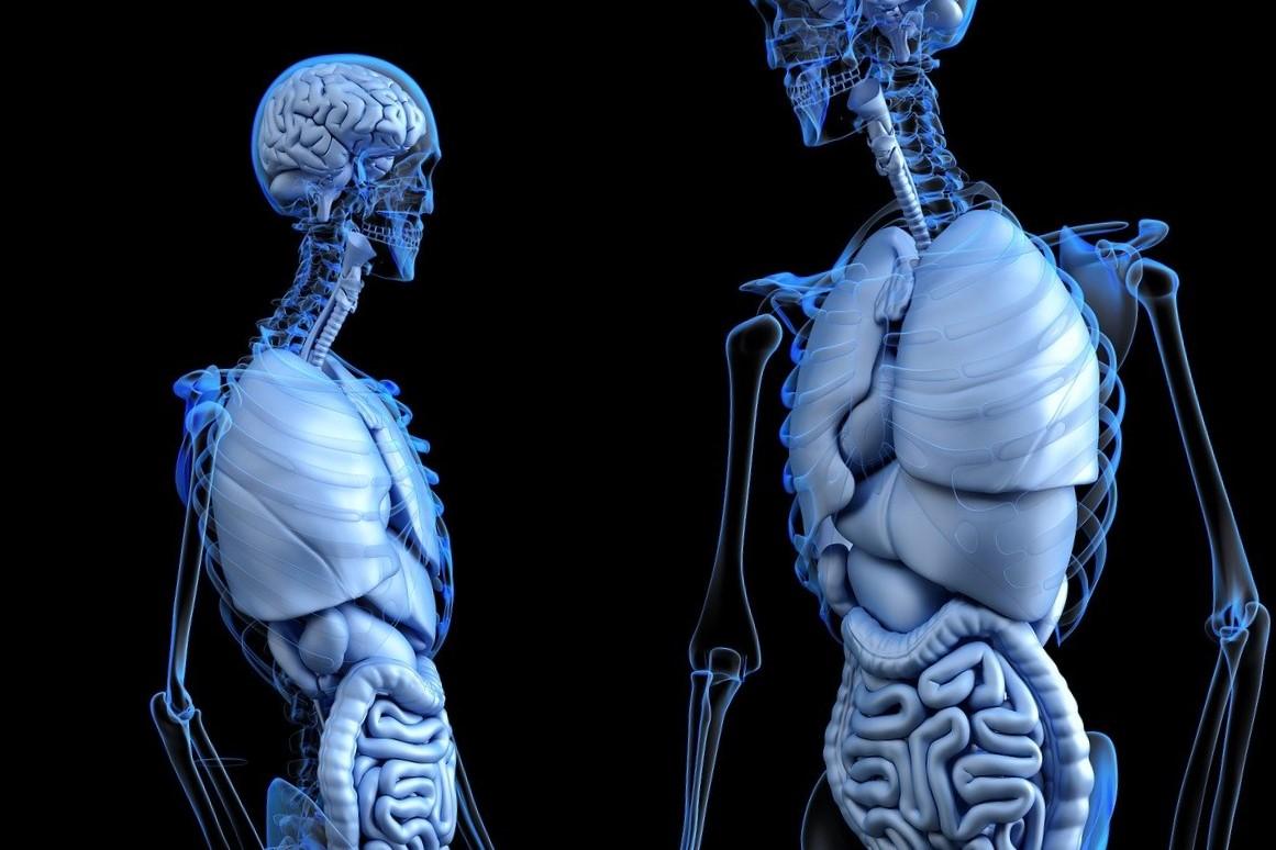 Anatomía básica del cuerpo humano